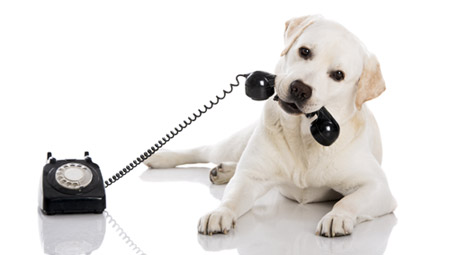 Contact In-Dog-Neat-O!